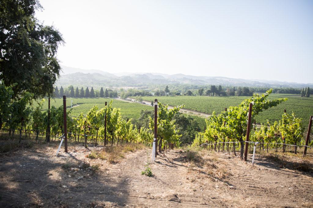 Copain Winery Healdsburg CA