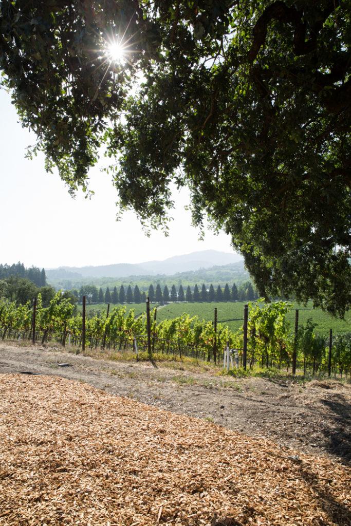 Copain winery photographer